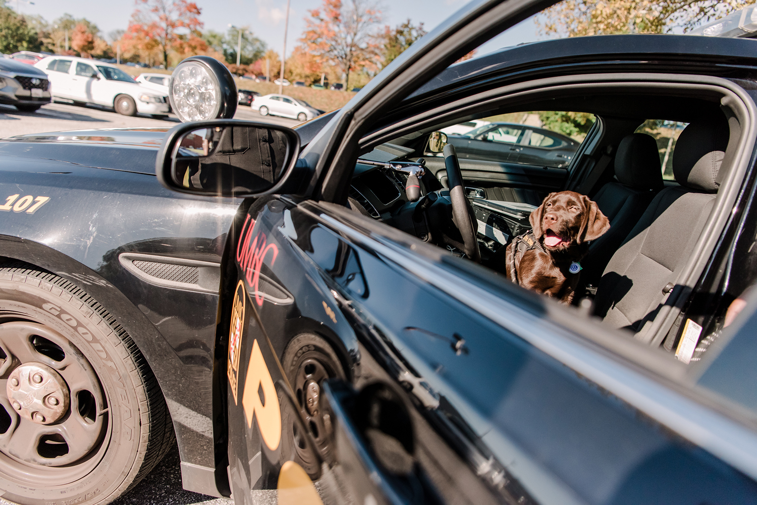 UMBC Police comfort dog Chip sits in the driver's seat of a UMCBC Police car