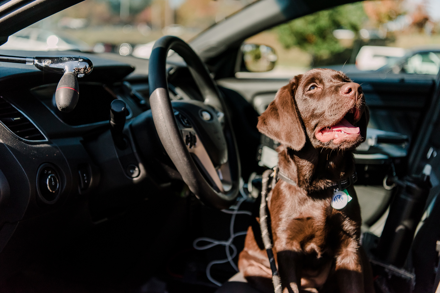 UMBC Police comfort dog Chip sits in the driver's seat of a car