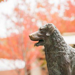 A bronze statue of a Chesapeake Bay retriever, known as True Grit