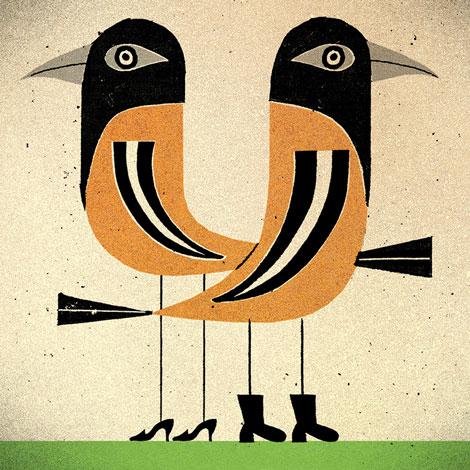 Orioles Illustration